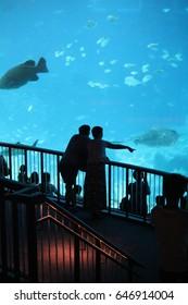 S.E.A AQUARIUM, SENTOSA, SINGAPORE, JANUARY, 2015: unidentified tourist at S.E.A aquarium in Sentosa, Singapore