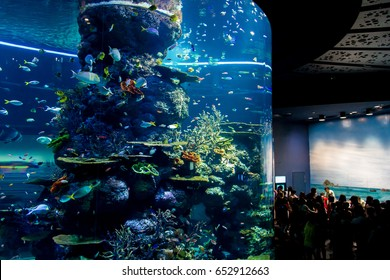 SEA AQUARIUM, SINGAPORE - APRIL 13, 2014 : Pacific artificial reef exhibit tank with schooling of tropical saltwater fish. People interesting touch pool near exhibit tank.