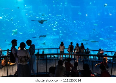 Sea Aquarium/Singapore: 16th June 2018- Singapore Sea Aquarium is one of  the key tourist attraction.  Every year it host thousands of tourist from all over the world.