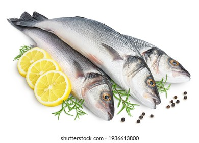 Sea bass fich isolated on white background with clipping path and full depth of field.
