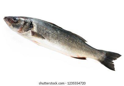 Sea bass fish isolated on white background. Dicentrarchus labrax