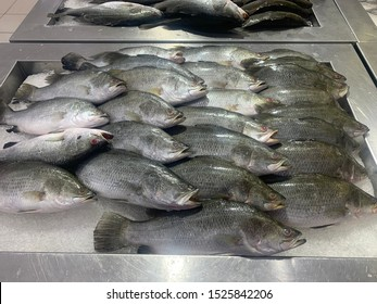 A sea bass fish known as Siakap / Barramundi locally displayed in a shop to sell.