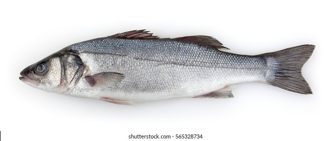 Sea bass isolated on white background with clipping path