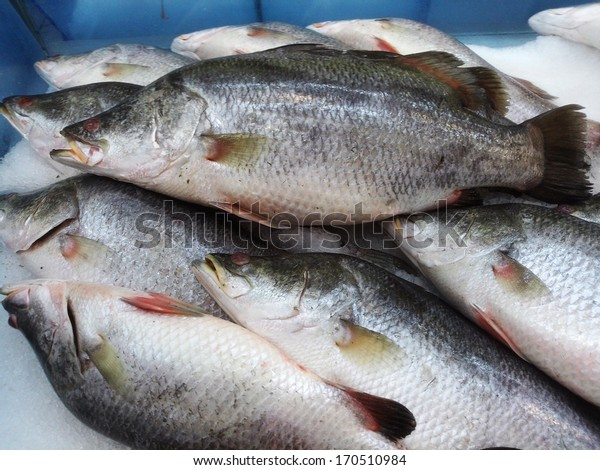 Sea bass in market with ice, ready