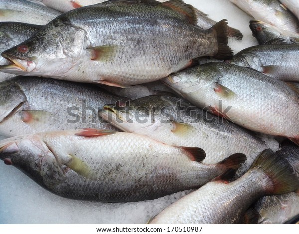 Sea bass in market with ice, ready for sell