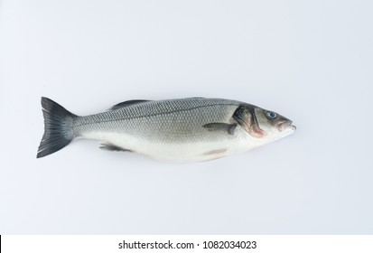 Sea bass on white background. Top view.