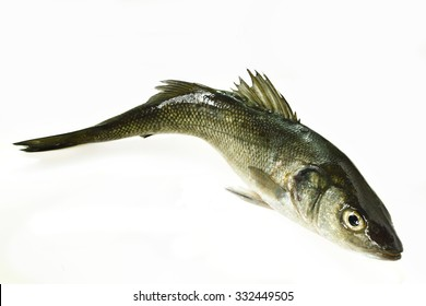 Sea bass on white background