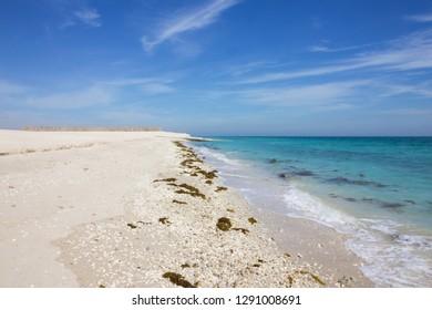 Sea beach on Sir Bani Yas island, United Arab Emirates (UAE), Abu Dhabi, Persian Gulf