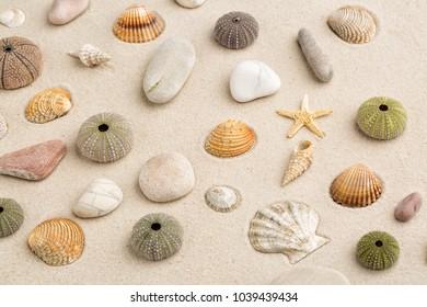 Sea beach sand background with seashells pebble and starfish