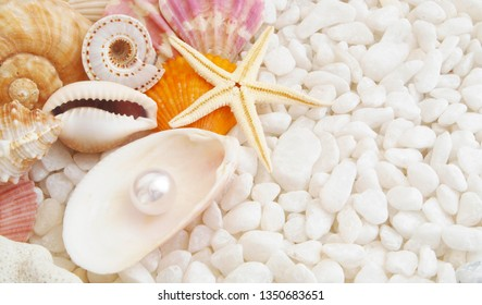 Sea and beach theme, seashells, starfish and pearl on stones background