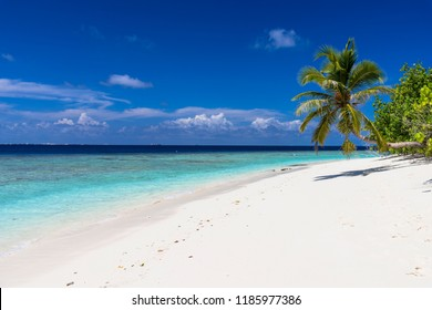 sea of the beautiful coral reef of the indian ocean