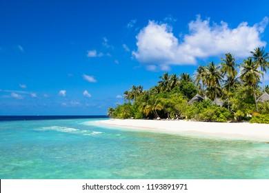 sea of beautiful coral reef of the indian ocean