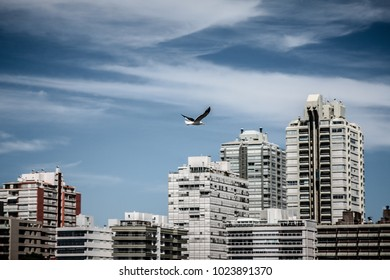 Sea bird flying in the sky of Punta Del Este city with beautiful sky and architecture behind