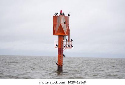 sea birds on the lighthouse, on the sea in autumn scenery, Hailuoto iceland, Finland, Oulu