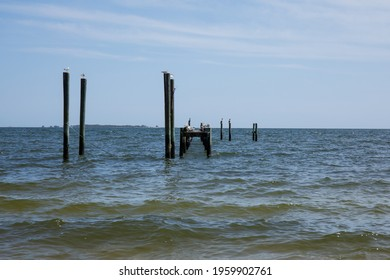 Sea birds perch on wooden pylons in the Gulf of Mexico.  Blue sky, blue ocean waves and wooden structures in the water with light surf