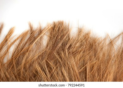 sea of blond hair