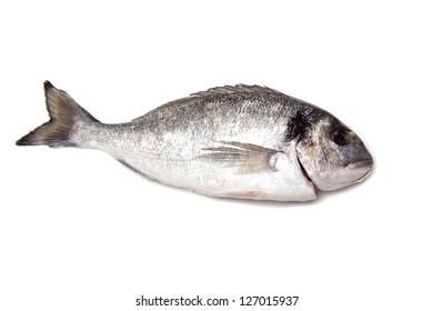 Sea Bream or Dorado fish isolated on a white studio background.