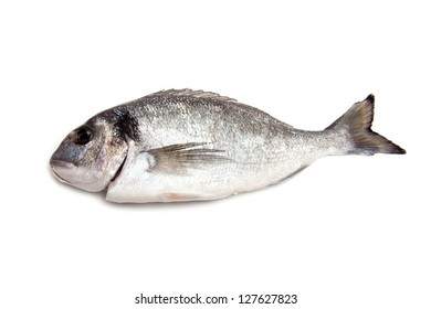 Sea Bream or Dorado fish isolated on a white studio background.