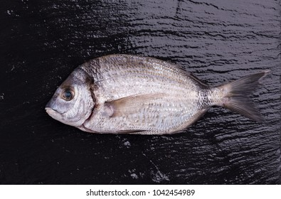 Sea bream or dorado sea fish on dark slate background.