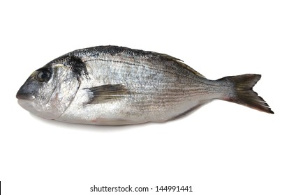 sea bream isolated