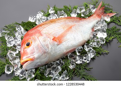 Sea breams isolated on white. Fish used for Sushi and other Japanese dishes.