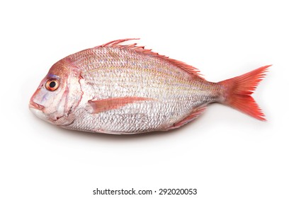 Sea breams ( sea breams / porgies or Sea bass Tai) isolated on white. Fish used for Sushi and othe Japanese dishes..