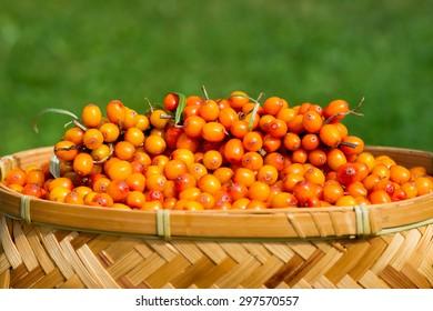 Sea buckthorn berries in a basket