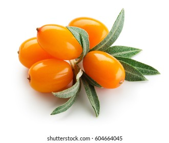 Sea buckthorn. Fresh ripe berries with leaves isolated on white background.