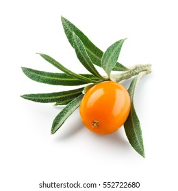 Sea buckthorn. Fresh ripe berry with leaves isolated on white background.