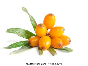 Sea buckthorn with green leaf on white background