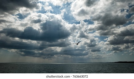 sea ,clouds and gulls