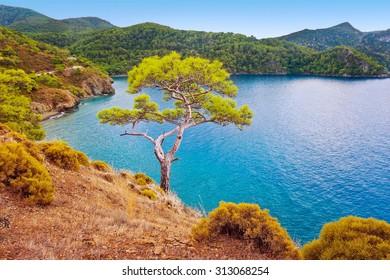 Sea coast landscape with pine. Fethiye. Turkey