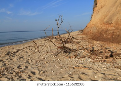 Sea coast sandy beach strewn with seashells and clay high bank of the cliff. The roots of plants strengthen the soil. Branches, wood and rubbish thrown on the sea shore