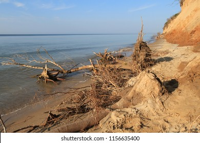Sea coast sandy beach strewn with seashells and clay high bank of the cliff. The roots of plants strengthen the soil. Branches, wood and rubbish thrown on the sea shore. Ecological disaster at sea and