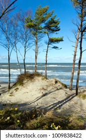 sea coast with trees, pines by the sea, the waves on the Baltic sea