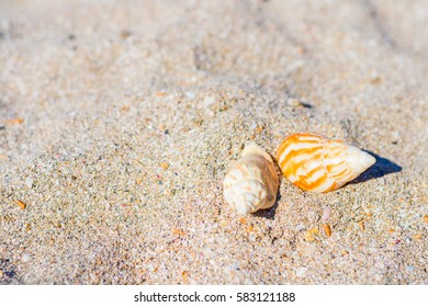 Sea cockleshells on golden beach sand. Natural background and texture. Travel concept. Summer time vacation composition. Top view with copy space