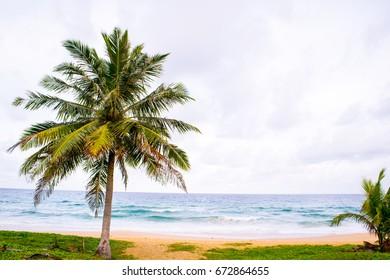 Sea coconut, sky