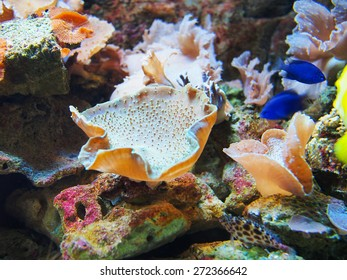 sea corals with blue fish