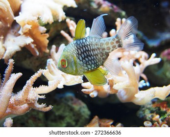 Sea corals with colorful fish