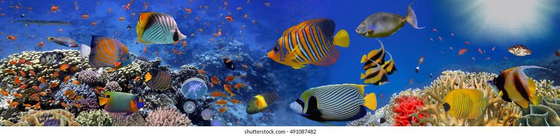 Sea corals. Panorama. Red Sea, Egypt