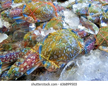 Sea crab.