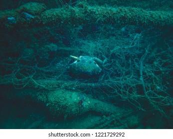 sea crab carcass in trawling net