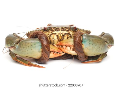 the sea crab isolated white