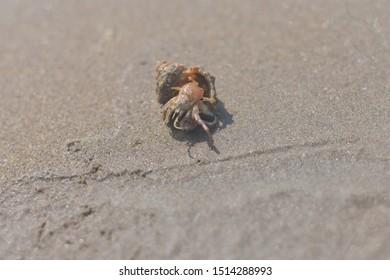 Sea creature dead or alive