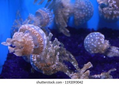 Sea creatures jellyfish