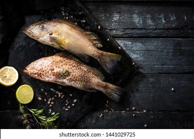 Sea delicacies. Fresh seafood. Fish Grouper