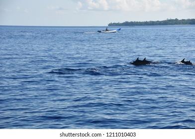The Sea of Dolphins in Wakatobi Island Indonesia