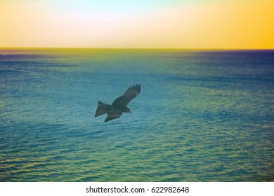 The sea eagles. Kites over Indian ocean. Tropical sunset and quiet surface of sea