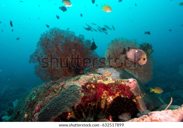 Sea fan coral marine animal nature underwater