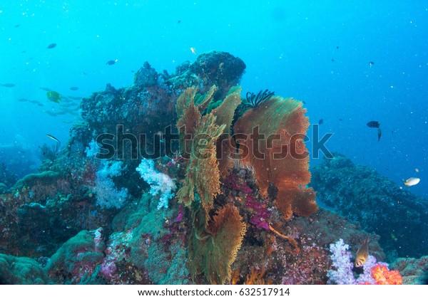 Sea fan coral marine animal nature underwater